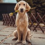 Dog Music Anti-Anxiety Music for Dogs