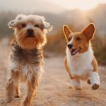 If the Dog You're Walking is Barking at Another Dog, What Should You Do?