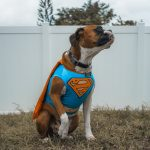 What is the Least Effective Method to Retrieve a Dog That Has Got off Leash